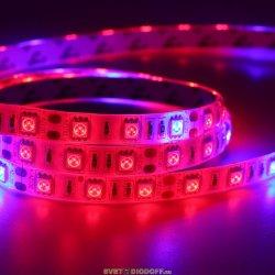 Лента светодиодная стандарт SMD 5050, 60 LED/м, 14,4 Вт/м, 12В , IP20, Красный